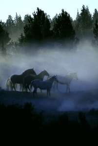 horses-in-the-mist