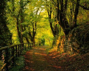 deciduous-forest-path