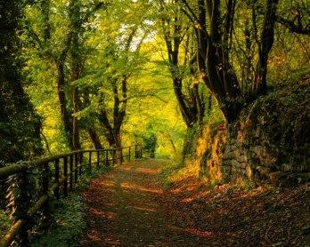 deciduous-forest-path