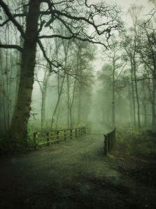 misty trees-bridge