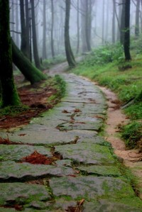 stone-path-in-forest