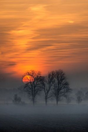 sunset-trees-mist