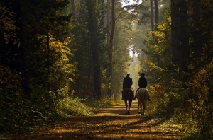 treed-path-horses