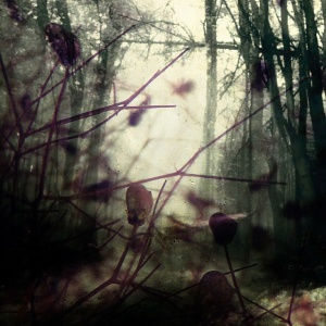 forest filigree