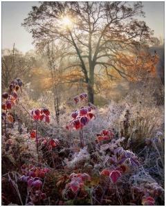frosty woods