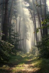 misty forest path