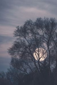 moon-through-trees