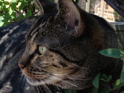 My cat, Sammy, being...