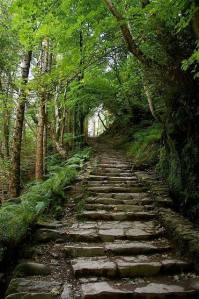 stone stairway in forest