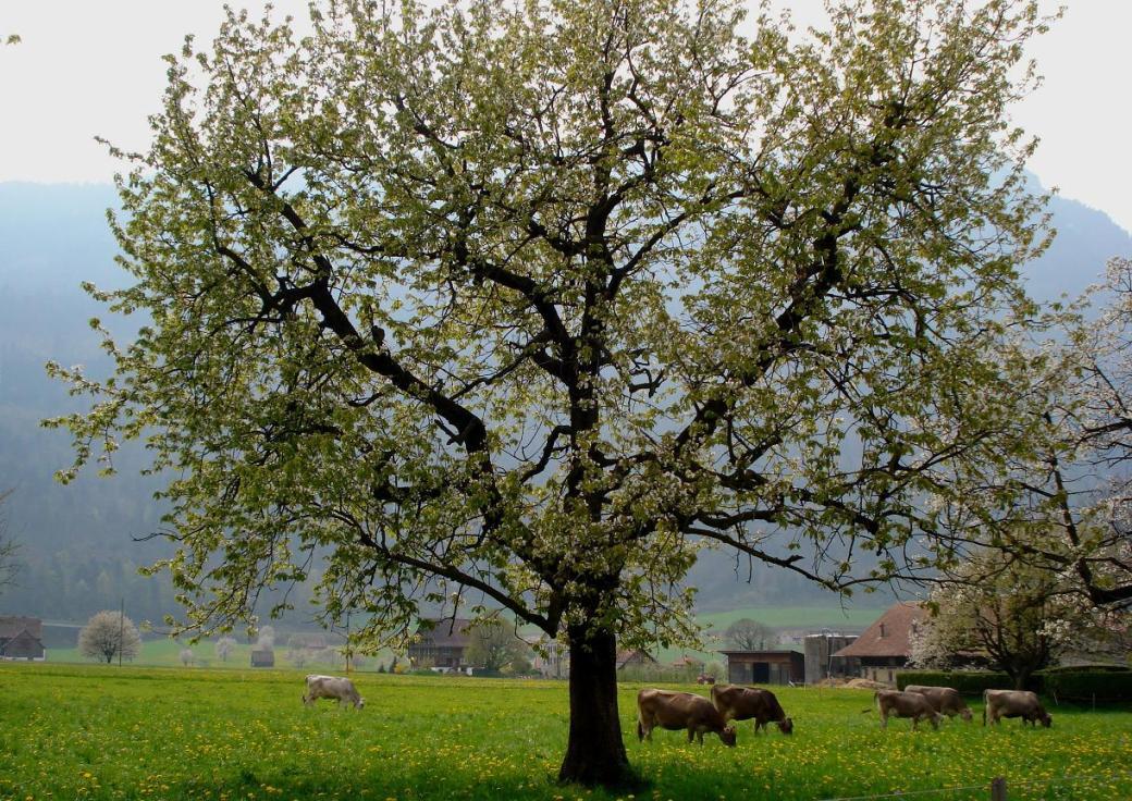 arth-pasture-tree