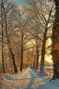 winter treed path