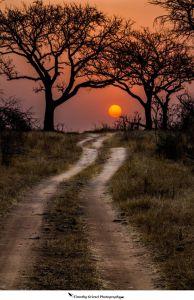 sunset path trees