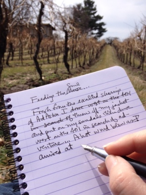 notebook-vineyard-NOTL