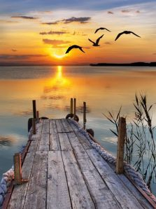 sunset-dock-birds