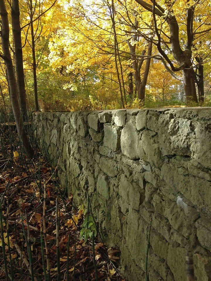 WardIsland wall in forest