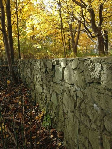 WardIsland wall in forest