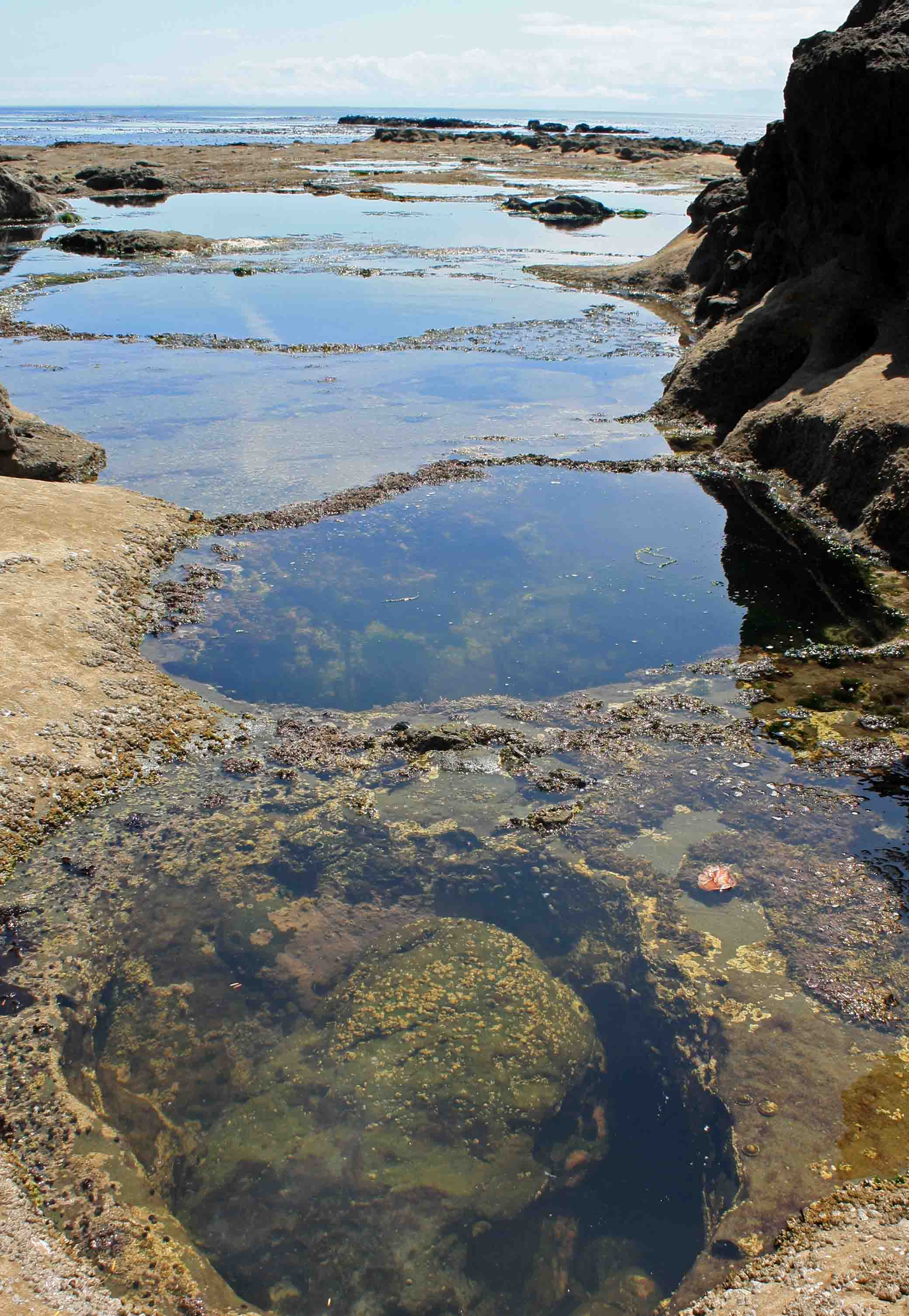botanical beach tidal pools copy