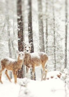winter deer trees