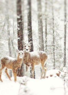 winter deer trees