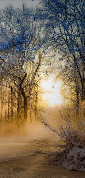 golden misty forest light