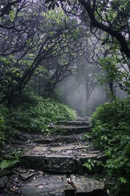 rock path forest