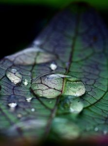 leaf-water drop copy