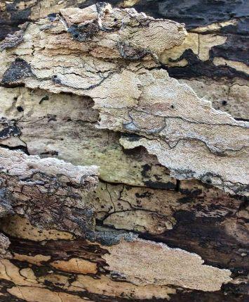 Log patterns 6