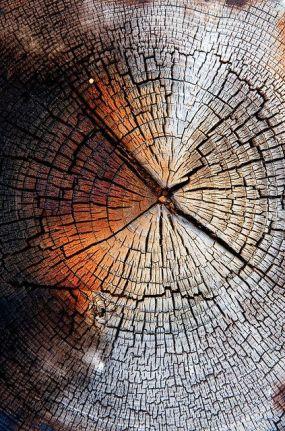 tree inside