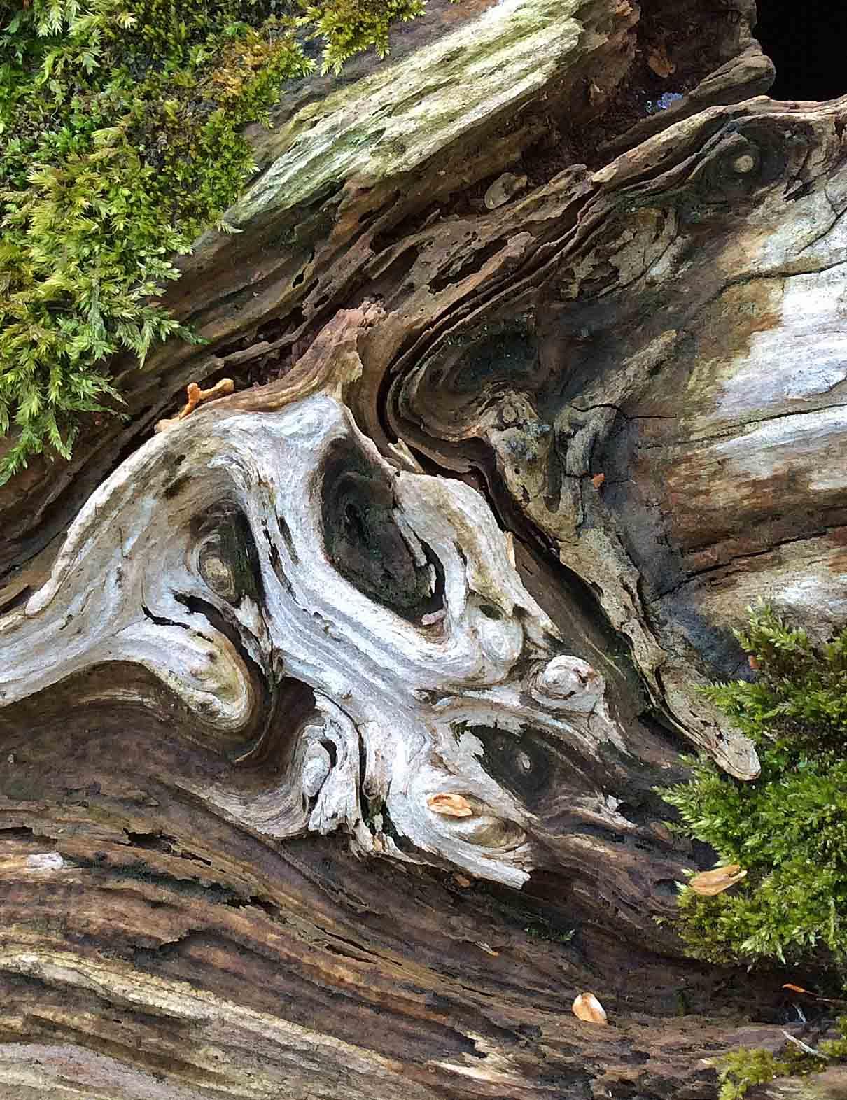 patterns-Cedar log moss2-LR