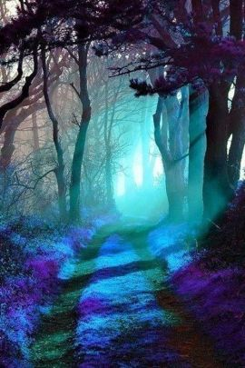 blue-forest-path