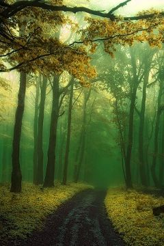 misty-forest-path-slovakia