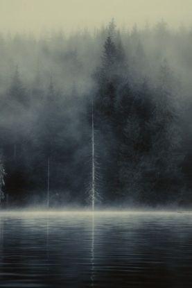 conifer mirror in mist