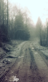 ws_Forest_Dirt_Road-long