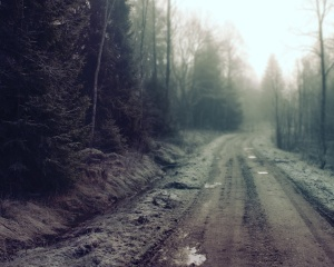 ws_Forest_Dirt_Road_1280x1024