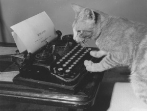 cat typewriter