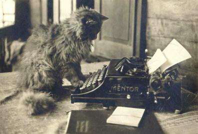 cat typewriter2