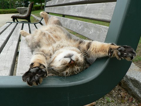cat-in-the-park