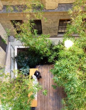 BambooGarden-lookingdown