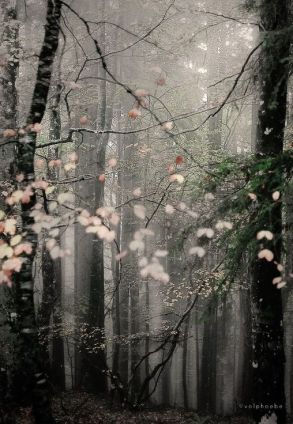 petals in the forest