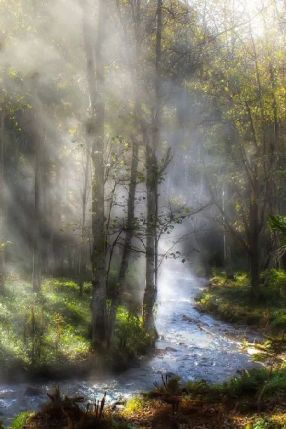 forest mist light stream