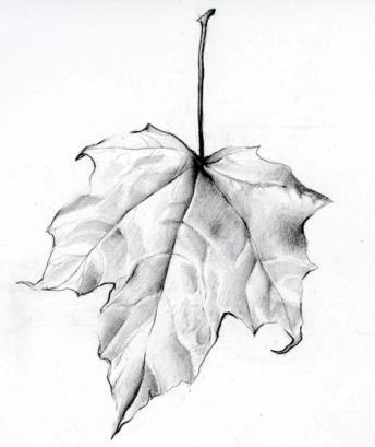 leaf-sketch