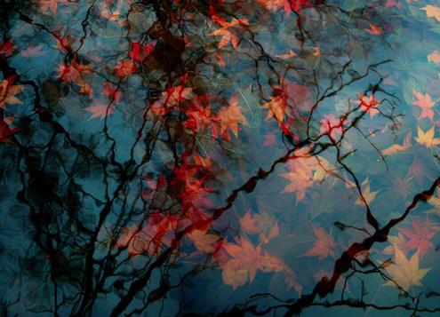 red-leaves-in-pond-vicki horton-bot