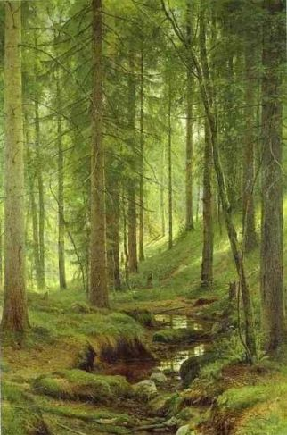 conifer forest stream