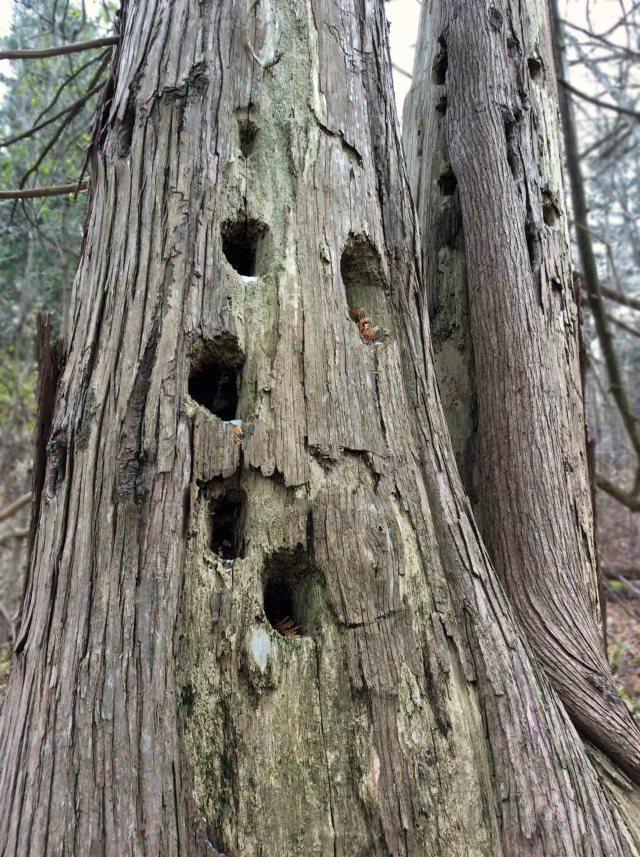 oldcedar-holes-LR