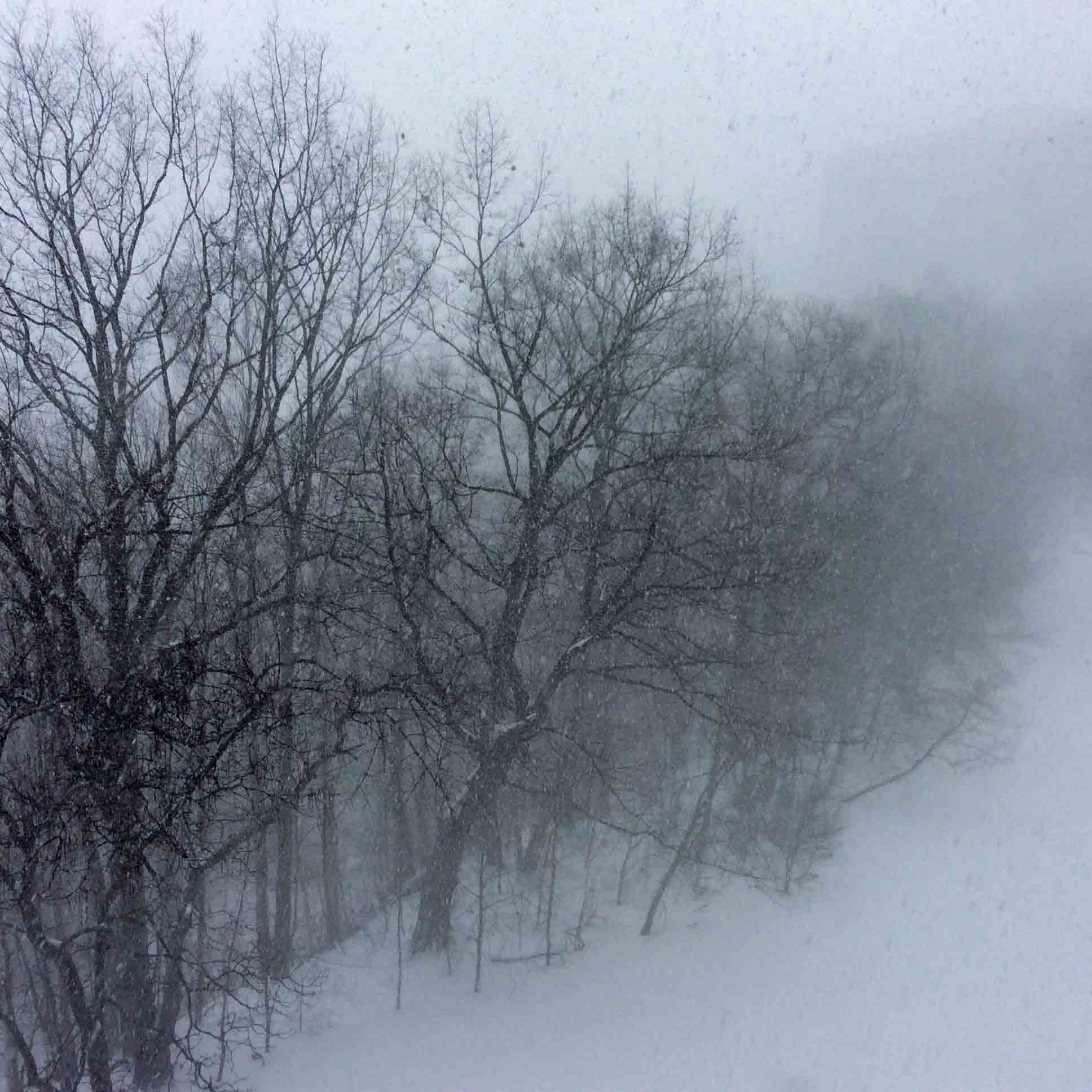 Snowtreeghosts2