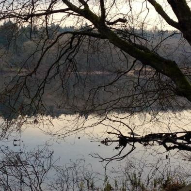 tree water deer lake