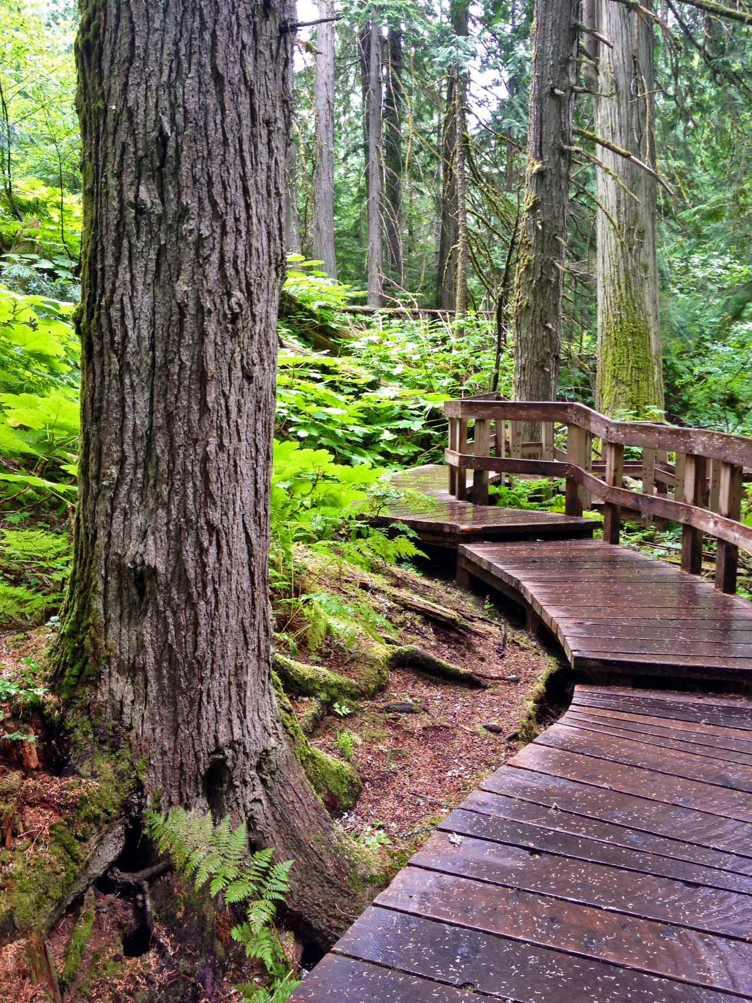 Cedar-boardwalk copy
