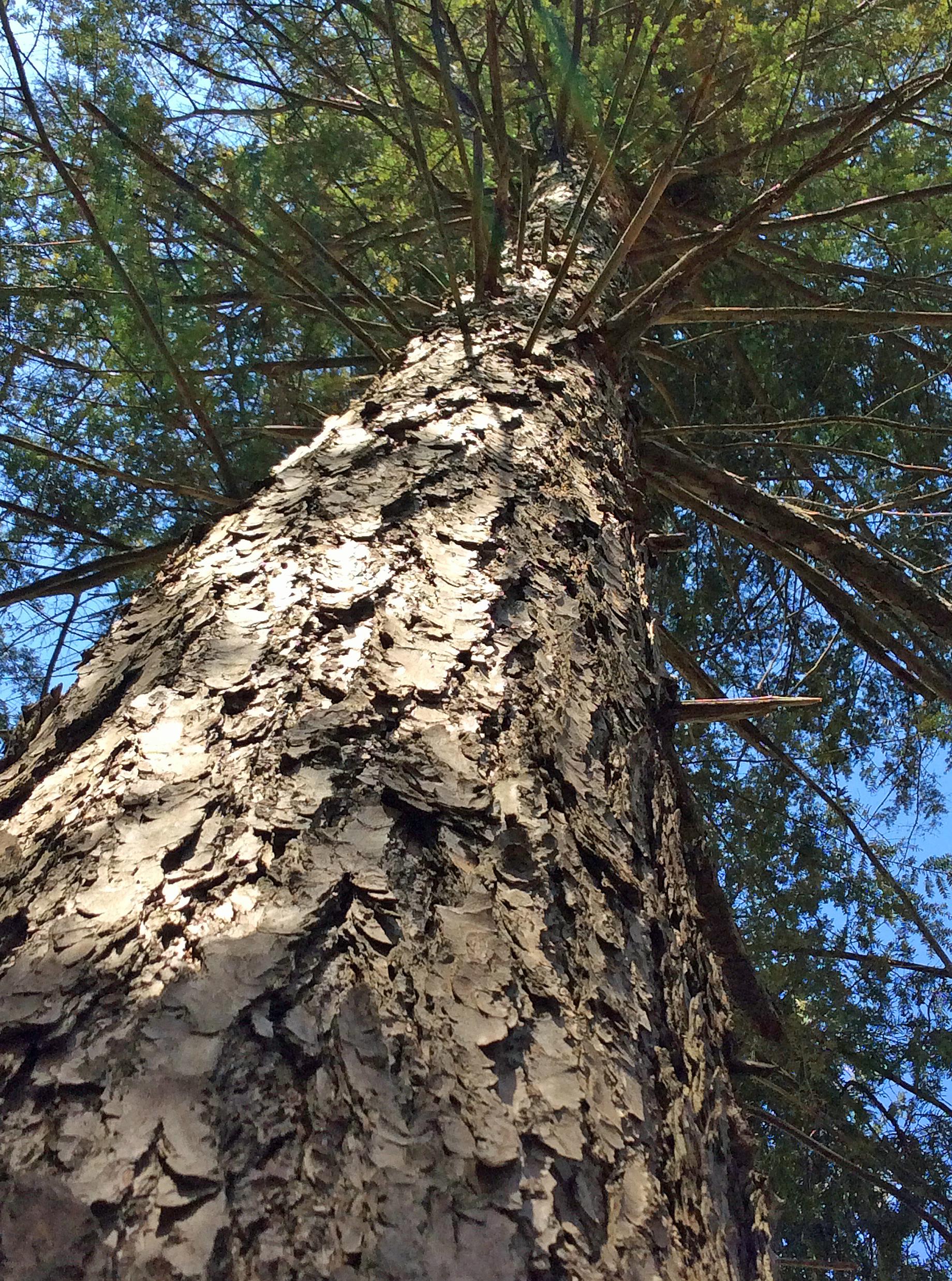 LittleRougeRiver-TreeUp copy