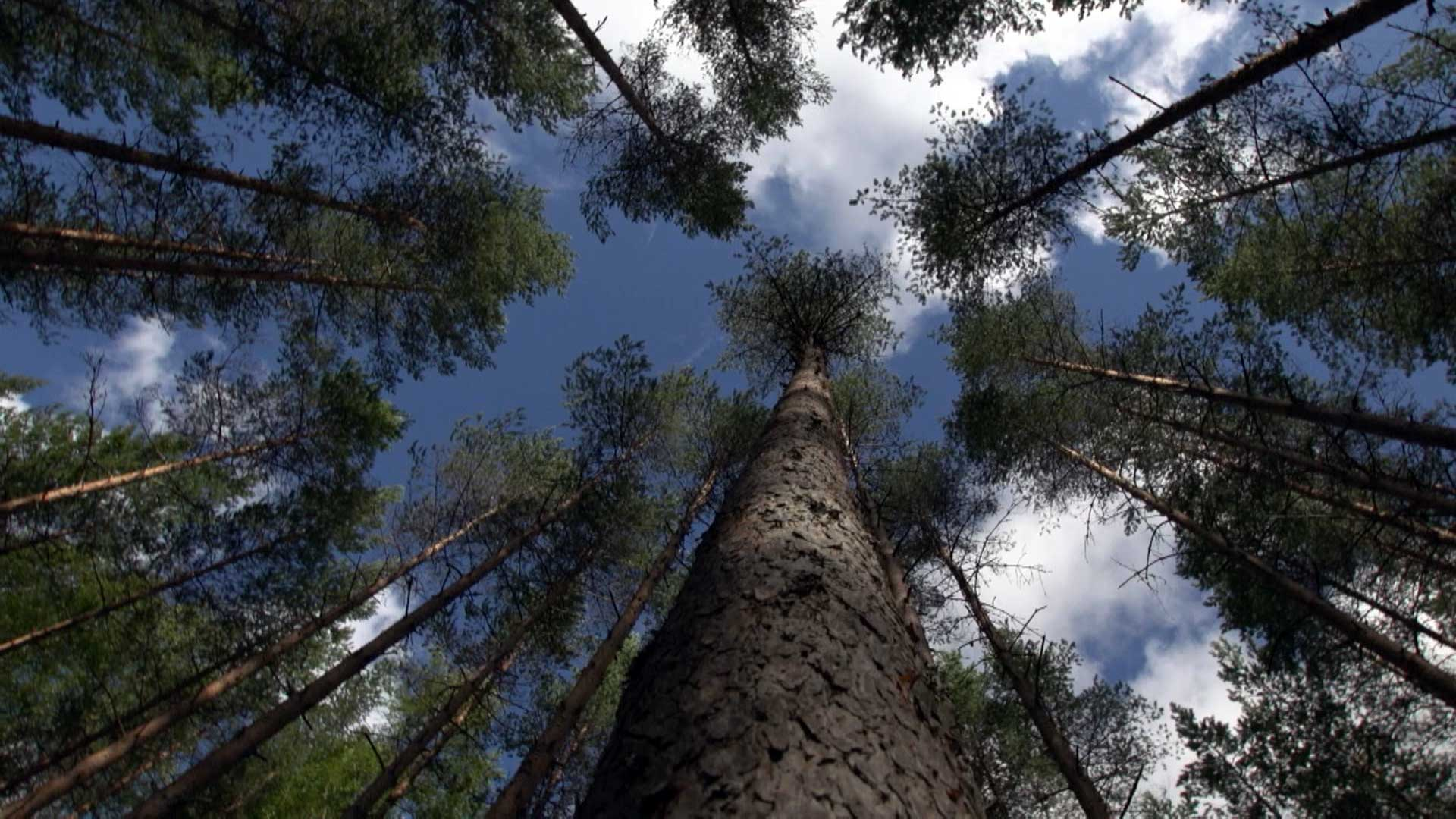 How Trees Can Save Us…Five Perspectives on Humanity's Relationship with Our Forests