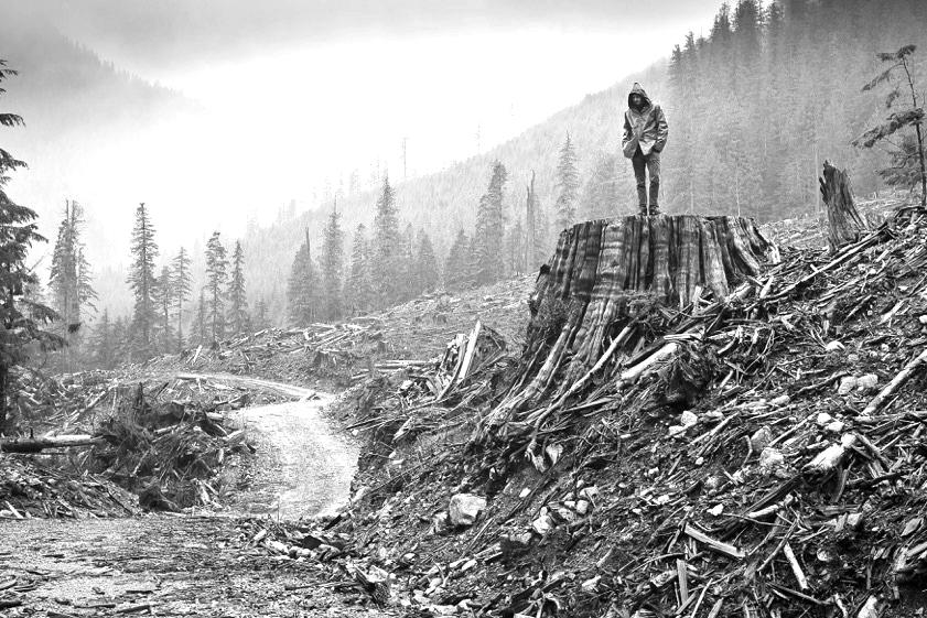 Clearcut gordon valley-BW